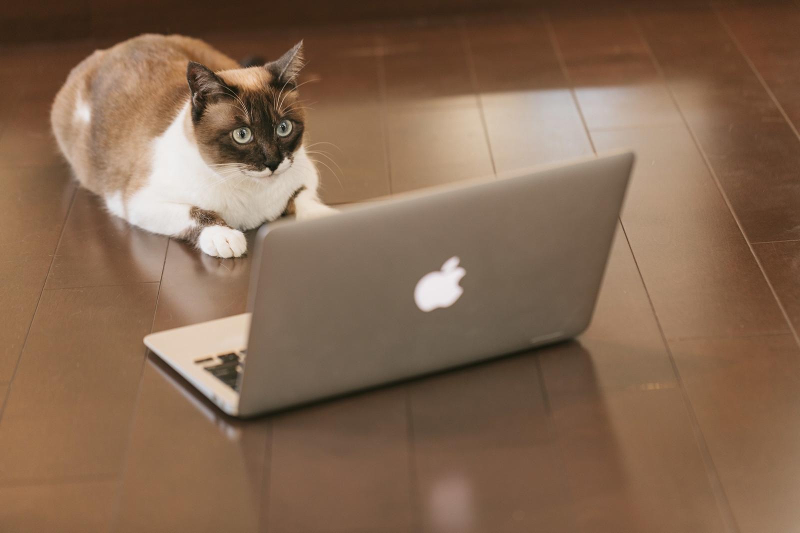 オンライン商談を成功させる4つのポイント